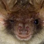 getting rid of bats charlotte nc