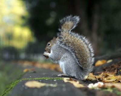 Mooresville NC Squirrel Exterminators