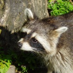 Davidson Wildlife Control