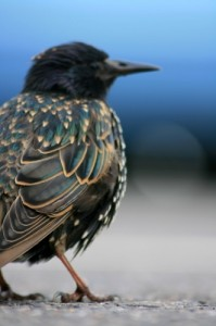 Charlotte NC Bird Removal Mecklenburg County