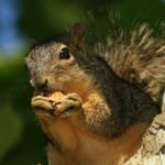 Squirrel Removal Video