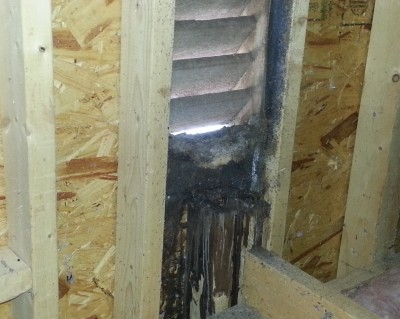 Bats Removed from Charlotte Attic