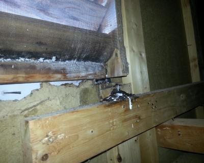 Bat Removal Gastonia NC